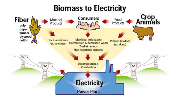 biomass_graphic